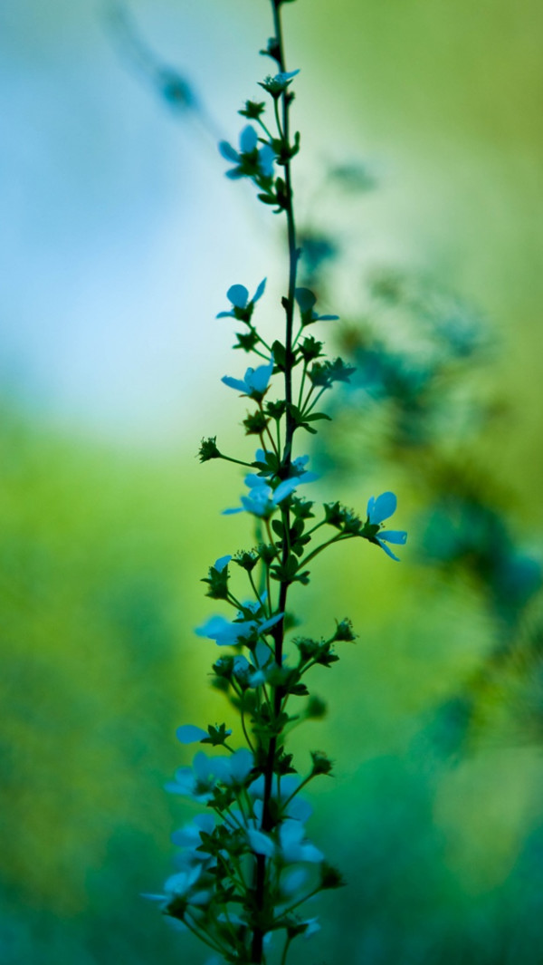 Blue And Green-Plant