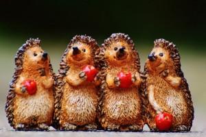 Funny hedgehog