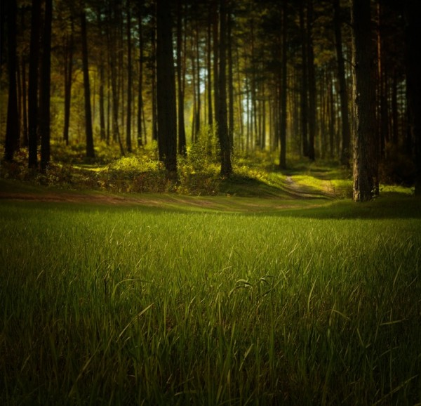 forest greenery
