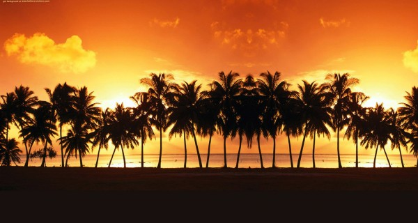 palm-tree-sunset-twitter-background