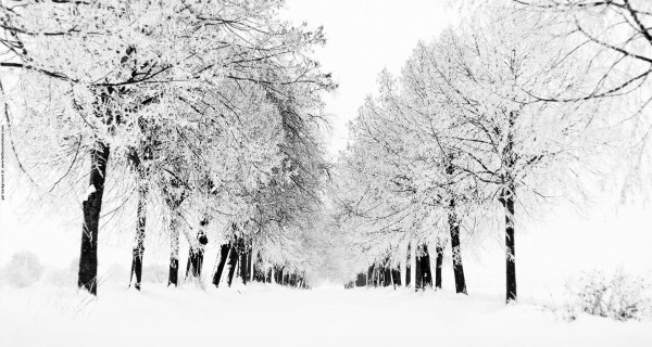 A collection of nice twitter backgrounds winter alley trees twitter background voltagebd Image collections