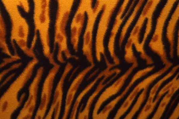 cheetah fu