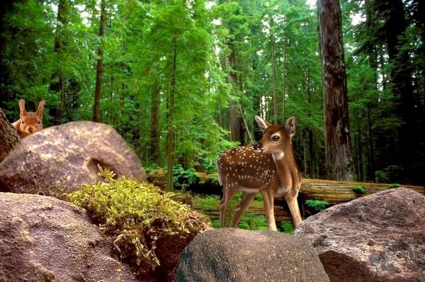 nature-deer
