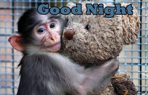 Nice Night