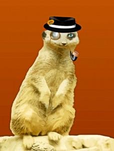 Comic Meerkat