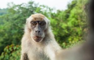 Cute Monkey Selfie