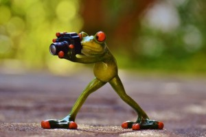Frog Funny Green