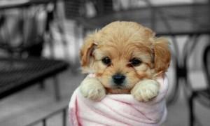 Puppy In Pink
