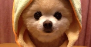 blanket-for-puppy