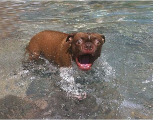 Shocked Small Dog